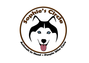 nonprofit-pet-rescue-daytona-beach.jpg